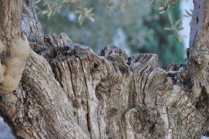 Postgrau de la Fundació Universitat de Girona: Significats i valors espirituals de la natura