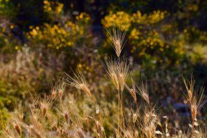 Bassa d'Òria: Els salms, poesia d'avui?