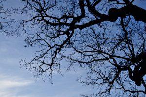 Curs d'especialització en valors i significats espirituals de la Natura segons les grans tradicions espirituals