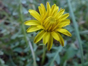 Natura & Espiritualitat: primavera