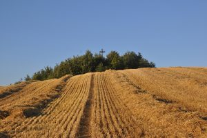 Natura & Espiritualitat: l'estiu