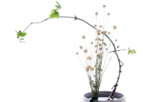 Retrobament amb l'ikebana