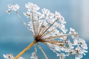 Natura & Espiritualitat: l'hivern